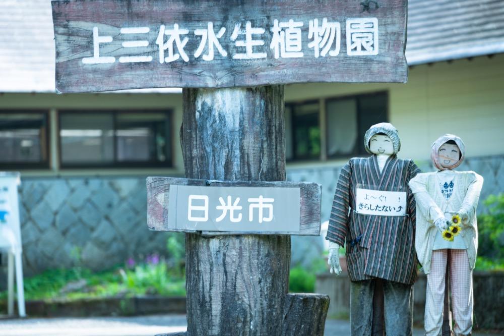 【三依 上三依水生植物園】「ヒマラヤの青いケシ」の見頃は5月下旬頃〜