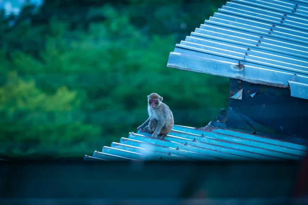【鬼怒川温泉ロープウェイ】鬼怒川温泉 最高所の眺望ポイントへ一気に行ける
