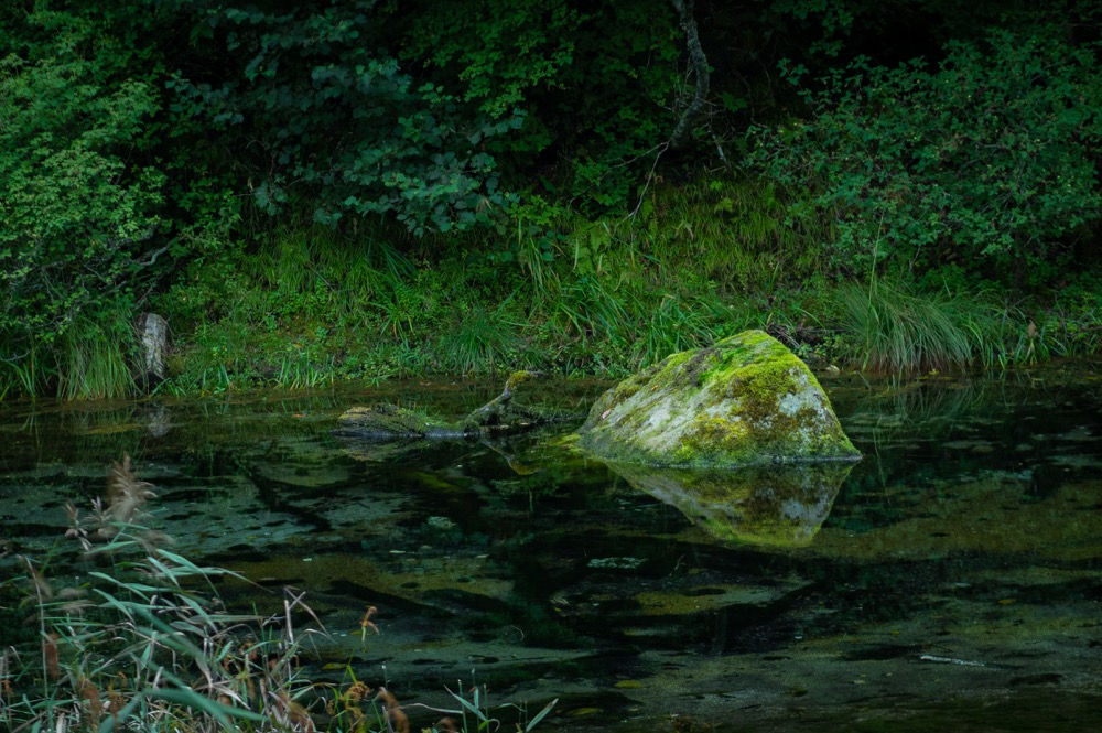 【自然計画 ネイチャーツアー レポ】奥日光の偉大さを深く学べる体験
