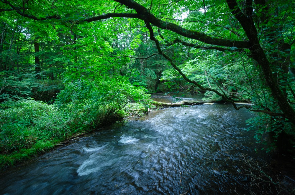 【湯滝】奥日光三滝の1つ。間近で見られる幅広の美しい流れ