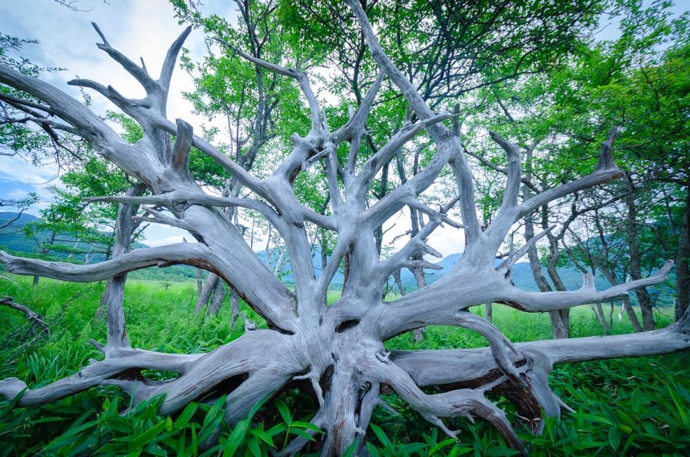 【戦場ヶ原】日光が誇る自然豊かな湿原でハイキング
