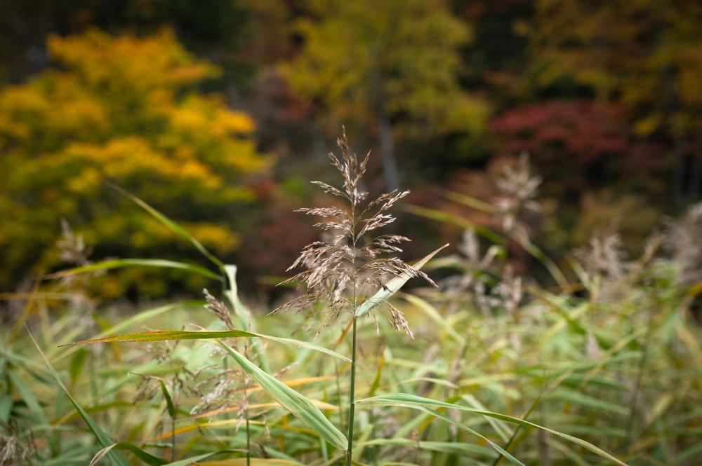 【奥日光 湯元温泉】県内有数のにごり湯。日光の世界遺産や自然と楽しむのが王道