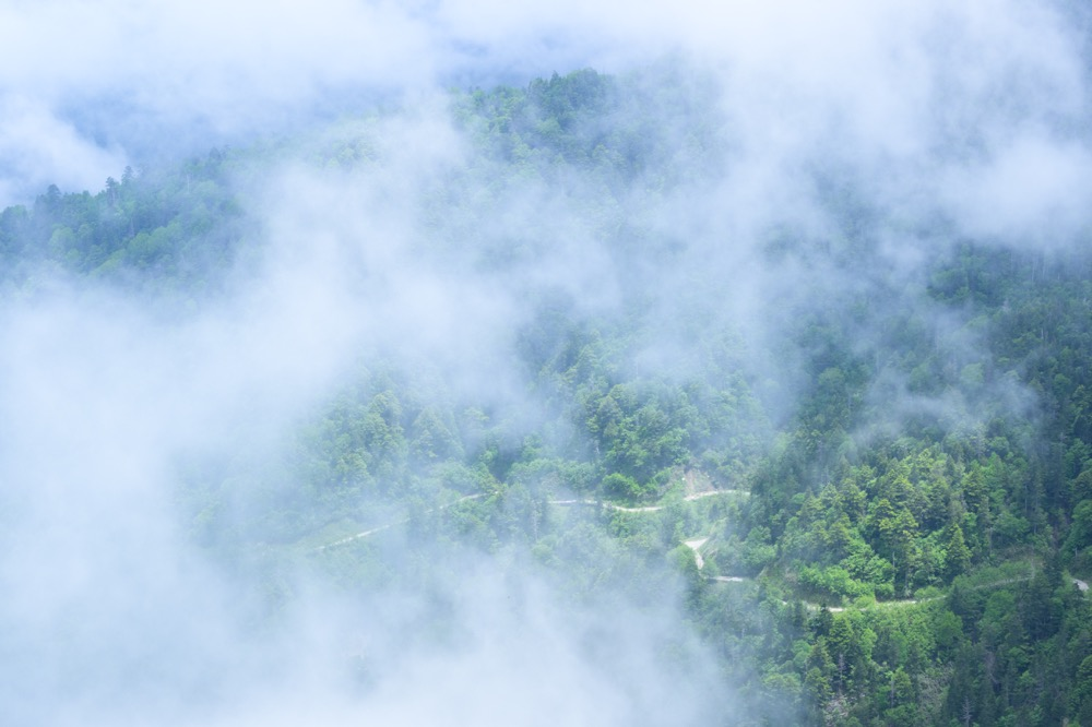 【尾瀬国立公園 田代山→帝釈山 登山と写真】福島が好きになる6月の花見登山