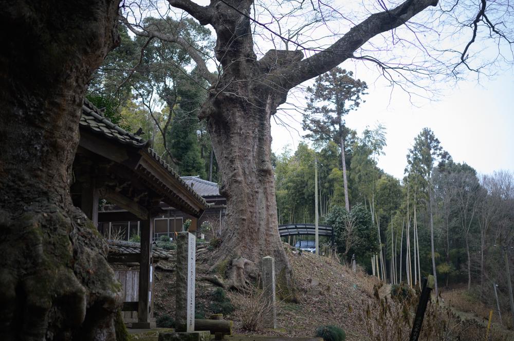 【真岡市 仏生寺(ぶっしょうじ)歴史】日光山信仰の生みの親を生みました