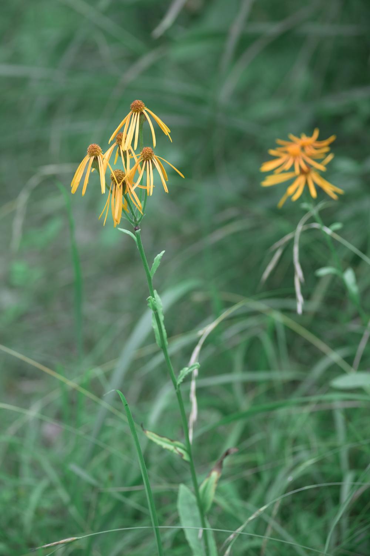 好きな高原の花