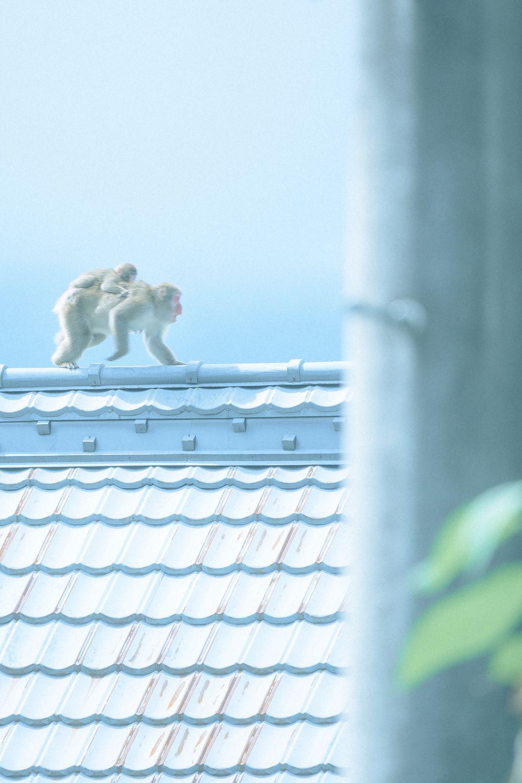 サルの人生