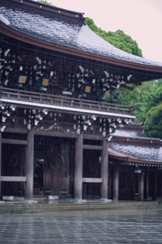 【明治神宮】雨の日の散歩