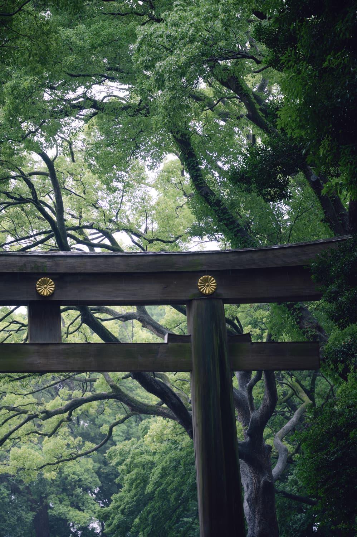 【明治神宮御苑】江戸時代は加藤さんの庭