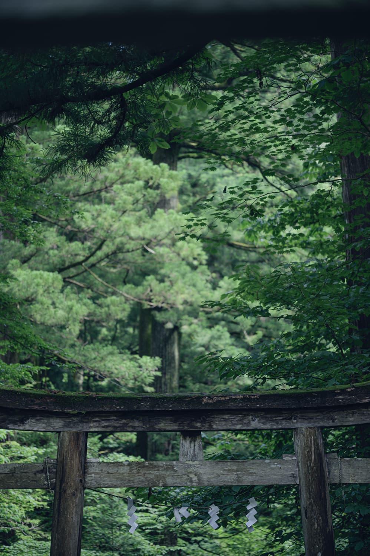 """【日光 二荒山神社別宮 滝尾神社(たきのおじんじゃ)】""""東照宮前""""は日光参拝の中心でした"""